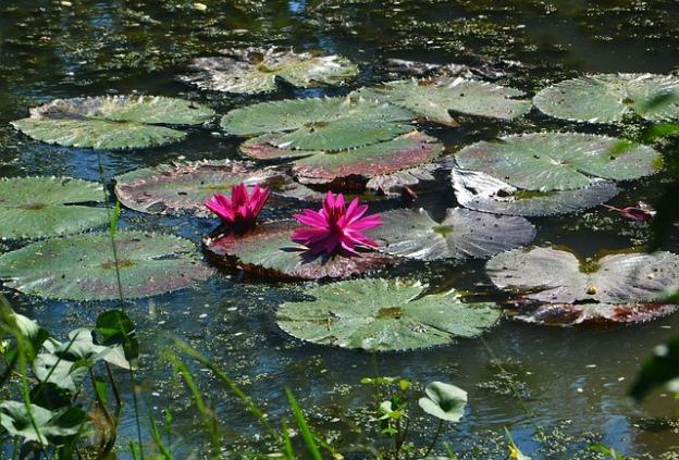 pond-987226_640